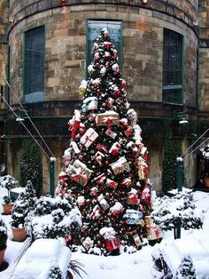 Beautiful Christmas tree in Edinburg, Scotland