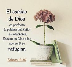 Biblical Verses, Prayer Verses, God Prayer, Bible Verses Quotes, Bible Scriptures, Faith Quotes, Gods Love Quotes, Quotes About God, Spanish Inspirational Quotes