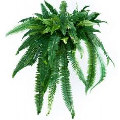 Artificial Forest Fern Hanging Plant