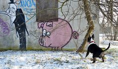 english bull terrier and pig  ;-)))