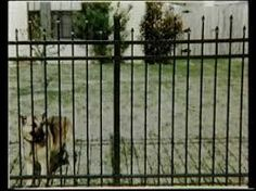 nz residential fencing - Google Search Fencing, Outdoor Structures, Google Search, Animals, Fences, Animales, Animaux, Animal, Animais