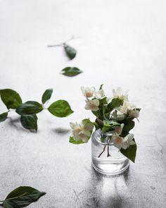 Plants, Home Decor, Pictures, Decoration Home, Room Decor, Plant, Home Interior Design, Planets, Home Decoration