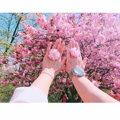 Follow tớ nha? Follow me?? Love Flowers, My Flower, Flower Power, Beautiful Flowers, Ulzzang Couple, Ulzzang Girl, Motifs Textiles, Spring Aesthetic, Profile Pictures Instagram