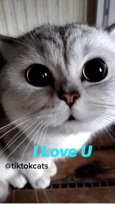 Cat Jokes, Funny Animal Jokes, Funny Grumpy Cat Memes, Funny Cat Videos, Funny Animal Pictures, Animal Memes, Grumpy Cat Quotes, Funny Memes, Funny Cute Cats