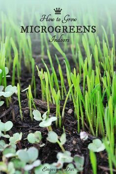 the complete guide to growing and selling microgreens pdf