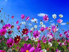 Beautiful Spring Flowers Pictures, Photos, and Images for Facebook, Tumblr, Pinterest, and Twitter