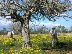 #horseriding in Mallorca´s #countryside www.sonjulia.com