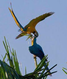 In Surinam