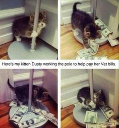 Stripper Cat #Cat, #Free-Funny-Pictures, #Stripper