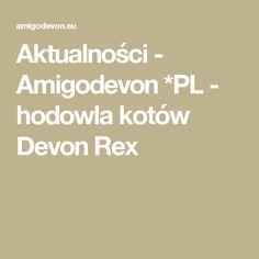 Aktualności - Amigodevon *PL - hodowla kotów Devon Rex