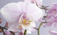 Wie Sie Orchideen richtig pflegen