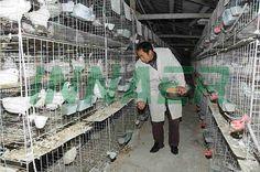 Pigeon Cage, Poultry Cage, Decor, Decoration, Decorating, Deco