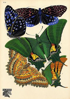 Eugène Séguy – was a French entomologist who published many portfolios of illustrations and designs from the turn of the century to the who worked in both the Art Deco and Art Nouveau styles. Butterfly Canvas, Butterfly Watercolor, Textiles, Nature Illustration, Vintage Butterfly, Bugs And Insects, Gravure, Beautiful Butterflies, Botanical Art