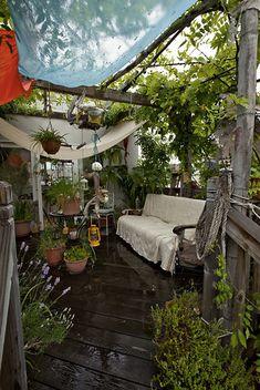 Grüne Oase - aus dem Balkon wird ein kleiner Dschungel, mitten in der Stadt >> garden