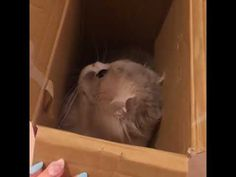 Funny Cat Videos, Funny Cats, Cute Cat Gif, Facebook, Youtube, Shop, Instagram, Funny Kitties, Cute Cats