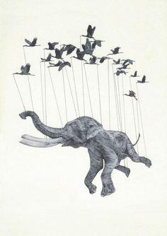 elefante pássaros