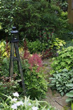 Яркие мелкие цветочки - лихнис, куст с резными листиками - герань темная, пестрые листочки - медуница.