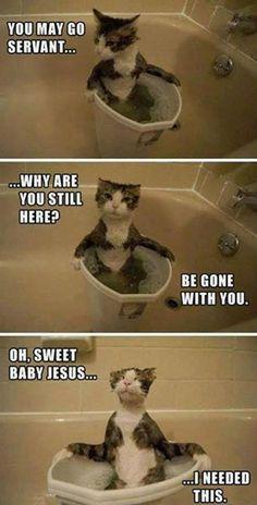 Cat master loll bath puaahahahaha
