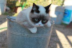 A bucket of Grump.  *