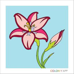 colouring practiceusing app colorfy - How To Make A Coloring Book App