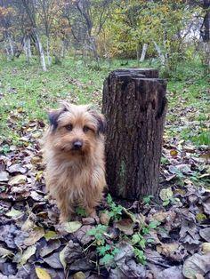 autor: jlez, Poland (tytuł: Natura 9007 - jesień, sad, liście i pies)