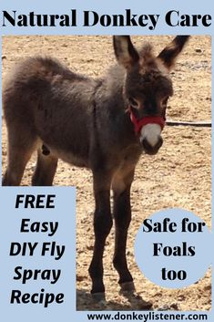 Make this all natural easy fly spray to protect your donkeys and other equine from flies Mini Donkey, The Donkey, Donkey Kong, Homemade Fly Spray, Homemade Dog, Fly Spray For Horses, Miniature Donkey, Travel Humor, Dog Agility