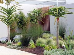 Petro Landscaping… Bellville, Cape Town, South Africa - All About Water Wise Landscaping, Front Yard Landscaping, Landscaping Ideas, Garden Ideas South Africa, Glasgow, Landscape Design, Garden Design, African Plants, Villa