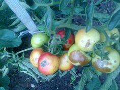 Vegetables, Garden, Compost, Garten, Lawn And Garden, Vegetable Recipes, Gardens, Gardening, Outdoor