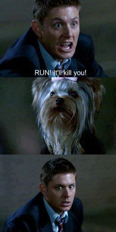 Do ghosts, demons, or vampires scare Dean Winchester? No. A little dog with a pink bow? Of course!