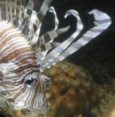 #Fisch 'Sea Life