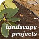 Easy landscaping and plant tutorials to help you get your green thumb.