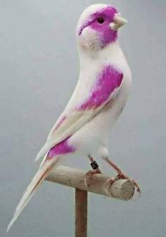 Funny Birds, Cute Birds, Pretty Birds, Beautiful Birds, Animals Beautiful, Cute Animals, Beautiful Things, Exotic Birds, Colorful Birds