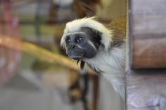 Trip to Blackpool zoo