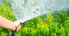 Consejos de jardinería para ahorrar tiempo, dinero y espacio :)