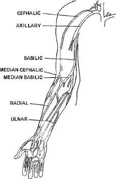 upper extremity venous anatomy Vascular Ultrasound, Ultrasound Sonography, Ultrasound School, Cool Science Facts, Ultrasound Technician, Interventional Radiology, Medical Mnemonics, Icu Nursing, Medical Coding