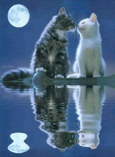 Keefers_Animated Animals Slideshow by Keith S Cute Cats And Kittens, I Love Cats, Cool Cats, Kitty Cats, Cute Baby Animals, Animals And Pets, Funny Animals, Animal Pictures, Cute Pictures