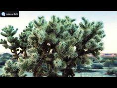 Márai Sándor - A szomorúság - YouTube Marvel, Youtube, Plants, Plant, Youtubers, Youtube Movies, Planets