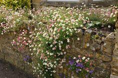 一年中センスがよい小さな庭をつくろう! 英国で見つけた7つの庭のアイデア – GardenStory (ガーデンストーリー) Flower Beds, Garden Planning, Home Deco, Garden Plants, Countryside, Planting Flowers, Entrance, Backyard, Exterior
