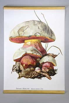 $48, pulldown canvas Red wine fungus mushroom print by empiricalstyle