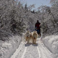 Goutez aux plaisirs de la nature en traîneau à chiens