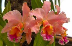 Orchids 12.2.12.2 by vi114n.deviantart.com on @deviantART