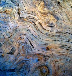 tree eddy by tashland, via Flickr