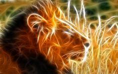 Animais Leão  Papel de Parede