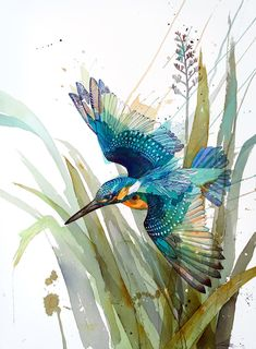 Official Rachel Walker Page. New Zealand watercolour, spray paint, pen and ink artist creating splashy celebrations of native and rare animals. Watercolor Bird, Watercolor Animals, Watercolor Paintings, Watercolor Artists, Watercolor Portraits, Watercolor Landscape, Abstract Paintings, Watercolours, Art Paintings