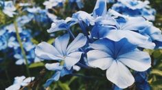 Flower bud blue iPad Air wallpaper Source by ilikewallpaper Eco Friendly Cars, Eco Friendly House, Blue Flowers, Wild Flowers, Blue Flower Wallpaper, Ipad Air Wallpaper, Chelsea Flower, Flower Images, Flower Beds