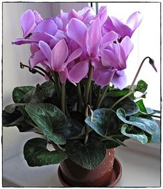 Saintpaulia, Orchids Garden, Feng Shui, Planting Flowers, Plants, Books, Gardening, Vases, Nature