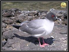 Bazı kuşlar da yuvalarını yerin altında gizlerler. Kıyı kırlangıçları nehir veya sahil şeridi boyunca, dik toprak setlerinin yanlarında uzun tüneller kazarlar. Bu tüneller yukarı doğru eğimlidir, bu sayede yağmur yüzünden yuvalarını selin basması engellenmiş olur. Her tünelin sonunda çim ve tüyle kaplanmış küçük bir odacık vardır. Kıyı kırlangıçları geniş koloniler halinde yuva kurarlar ve aynı kıyıya seneler sonra yeniden dönerler.