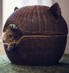 #Cat #Torode #Basket. http://www.mindblowingpicture.com/wallpaper/cats/wp42tkdt.html