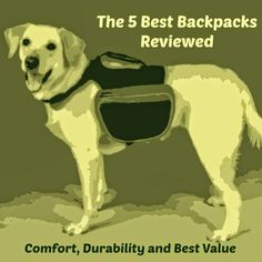 The Modern Bark | Dog Training Tips: Find Your Ideal Dog Backpack | 2016 5 Best Dog Backpacks Reviewed