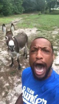 Animal Jokes, Funny Animal Memes, Cute Funny Animals, Funny Animal Pictures, Cute Baby Animals, Funny Cute, Funny Horse Memes, Hilarious, Funny Images